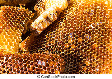 Bee on honeycomb, fresh honey from wild bees. - Bee on...