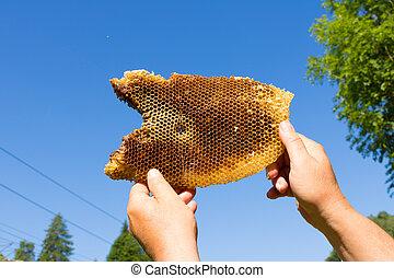 fresh honey in comb, wild bees. - fresh honey in comb
