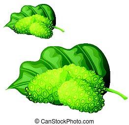 Noni fruit illustration. Cartoon vector icon isolated on...