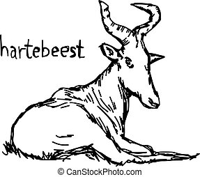Hartebeest - vector illustration sketch hand drawn with black lines, isolated on white background