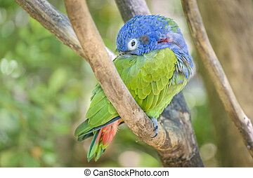 Tropical Parrot at Zoo, Guayaquil - Tropical parrot at...