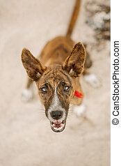 Happy dog at the beach. - Close up portrait of beautiful...