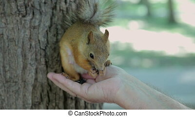 A man feeds a squirrel in the park.
