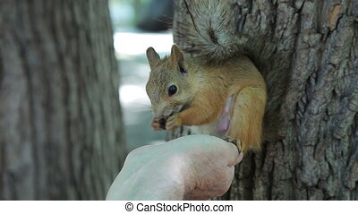 A man feeds a squirrel in the park. Squirrel takes food from...