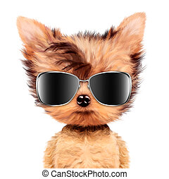 Funny adorable doggy girl with aviator sunglasses, isolated...