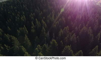 Aerial view of spruce forest in Montenegro - Aerial view of...