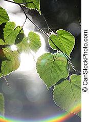 Sun flare through branches