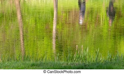 Green Lake Water Surface in Nature