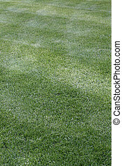 Clean cut grass with stripes
