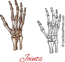Vector sketch icon of human hand bones or joints - Human...