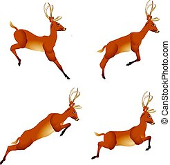 Deer in four phases of the jump