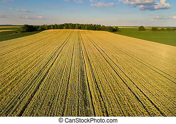 Landscape of wheat field in plains - Beautiful agricultural...