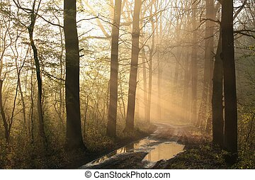 Early spring forest at sunrise