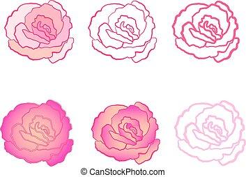 rose 005