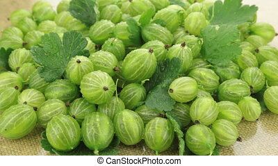 Zoom of a pile of green gooseberry in droplets of dew....
