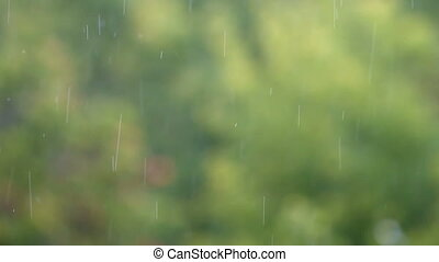 rain drops on a background of green leaves in the summer park