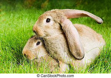 two rabbits on green grass