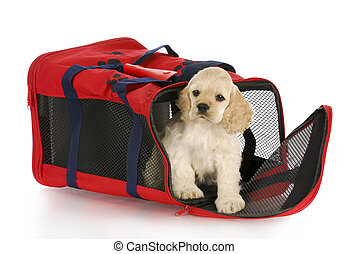 puppy in a dog crate bag - cocker spaniel puppy in a red...