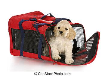 perrito, perro, cajón, bolsa