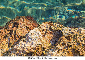 Rocky adriatic shore - Landscape photo of rocky adriatic...