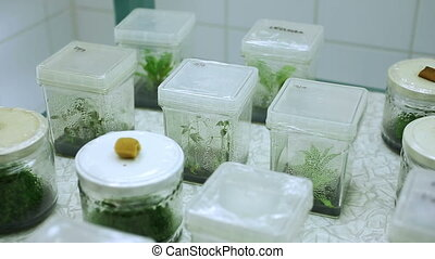 Research medical plants cultivation growth, nutrient box...