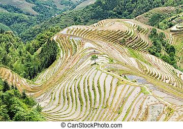 Longji Rice Terraces located Guilin Guangxi Zhuang...