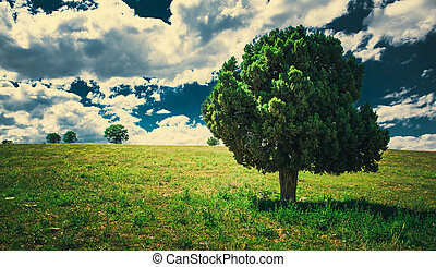 beauty in nature - the image of a single tree in nature