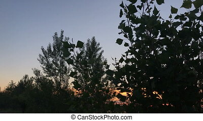 silhouette of deciduous trees in the sunset
