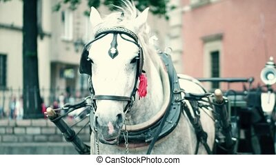 Harnessed dapple gray horse on the street - Harnessed horse...