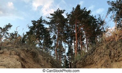 forest with views of earth fault - beautiful forest with...
