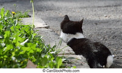 Hungry cat prepare her attack for hunt food in green grass...