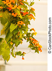 Bush with orange flowers hanging on wall