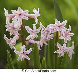 Fresh spring flower