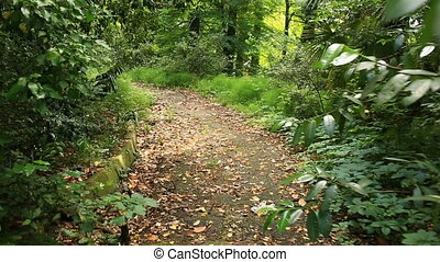 Someone walking through the rainforest path, glide shot,...