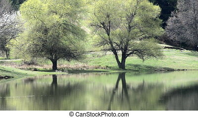 Rippling lake surface and silhouettes of wooden tree making...