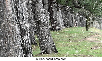 snow falling,old natural forest woods , trees background, green nature landscape