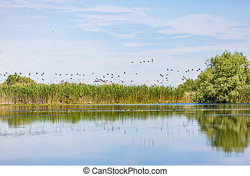 Beautiful Danube Delta - Beautiful landscape photo of Danube...
