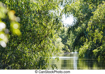 Danube Delta landscape - Beautiful landscape photo of Danube...