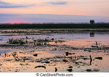 Beautiful sunset in Danube Delta - Landscape photo of...