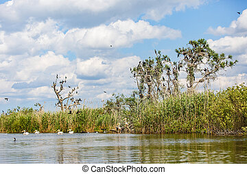 Danube Delta wildlife - Landscape photo of beautiful Danube...