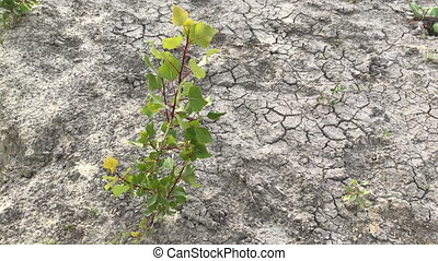 lonely plant on dry land - close up of lonely plant on dry...
