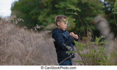 Boy discover nature. Little kid tears off the thorns from...