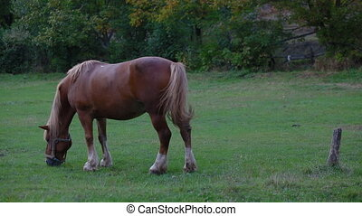 One horse grazing on the field. Overall plan with film look.