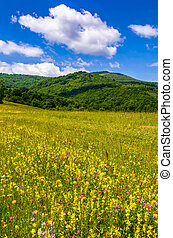 countryside summer landscape in mountains on fine weather...