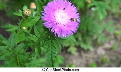 little bug sitting on a purple flower