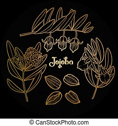 Graphic jojoba plant