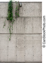 Industrial concrete wall with ivy hanging - Industrial...