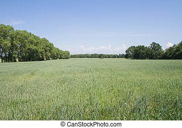 campo, vista