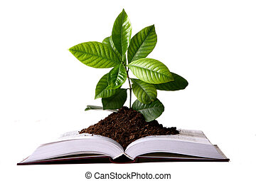 green plant growth from book - a green plant growth from...
