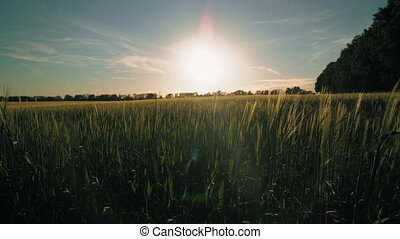 Summer scenery on agricultural yield - Breathtaking...